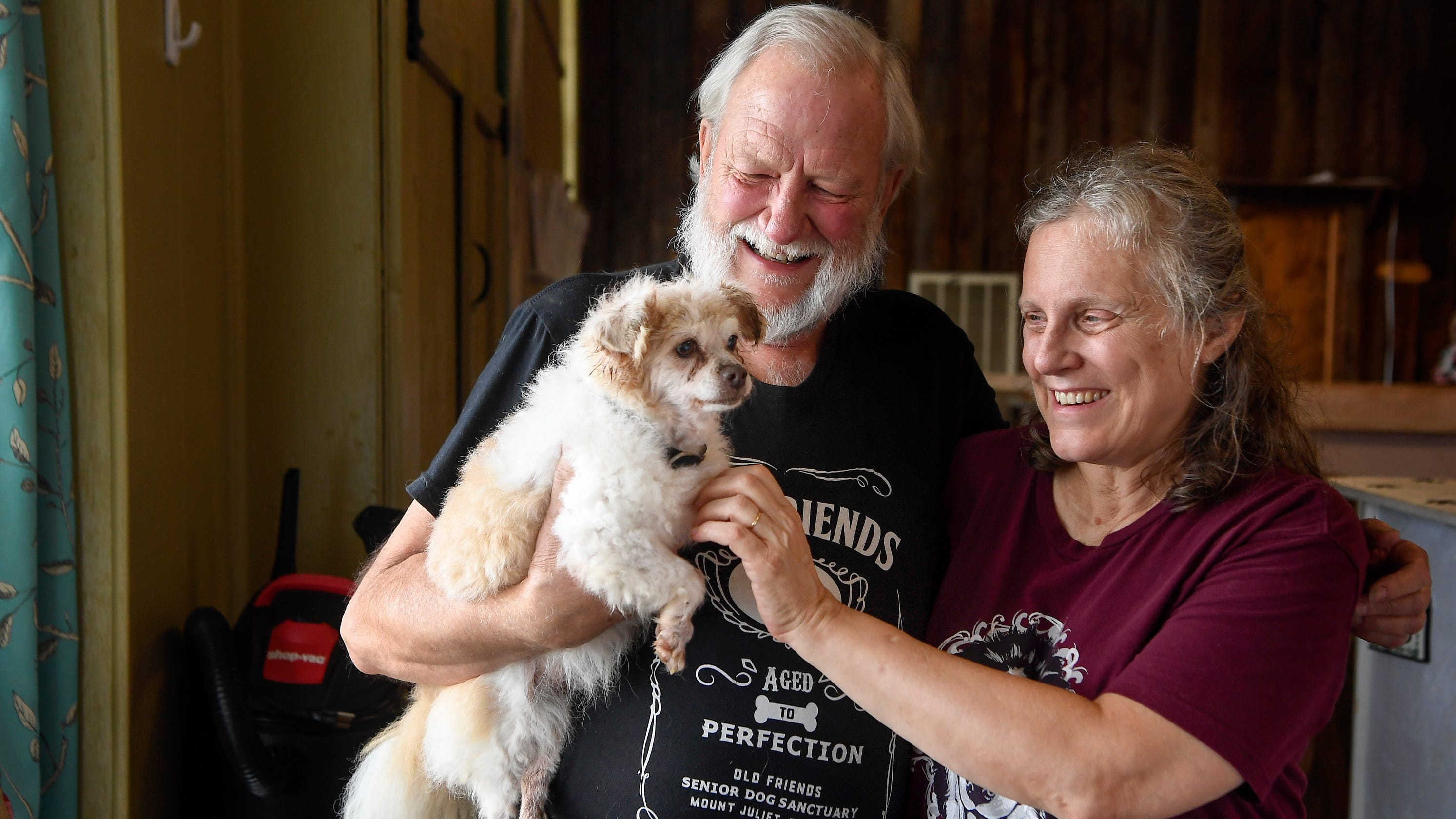 How this senior dog sanctuary became an internet sensation