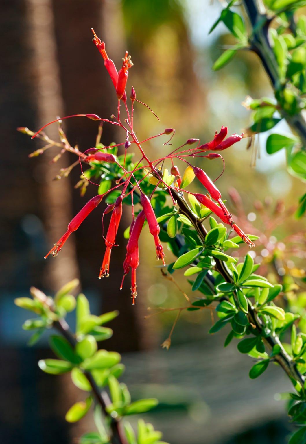 A flower in Palm Springs photographer Gary Dorothy's backyard garden