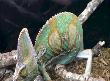 Looking for a new family pet, like a chameleon? Hundreds of reptiles, amphibians, spiders, small exotic animals and more will be at Repticon Baltimore on Sept. 29-30 at the Maryland State Fairgrounds in Timonium. Vendors, breeders and educators will be at the family-friendly expo, which will feature seminars, merchandise and live interactions with potential pets. The expo runs from 10 a.m. to 5 p.m. Saturday and 10 a.m. to 4 p.m. Sunday. Tickets are $10 for adults, $5 for kids 5-12 and under 5 are free. Visit repticon.com/maryland/baltimore for more.