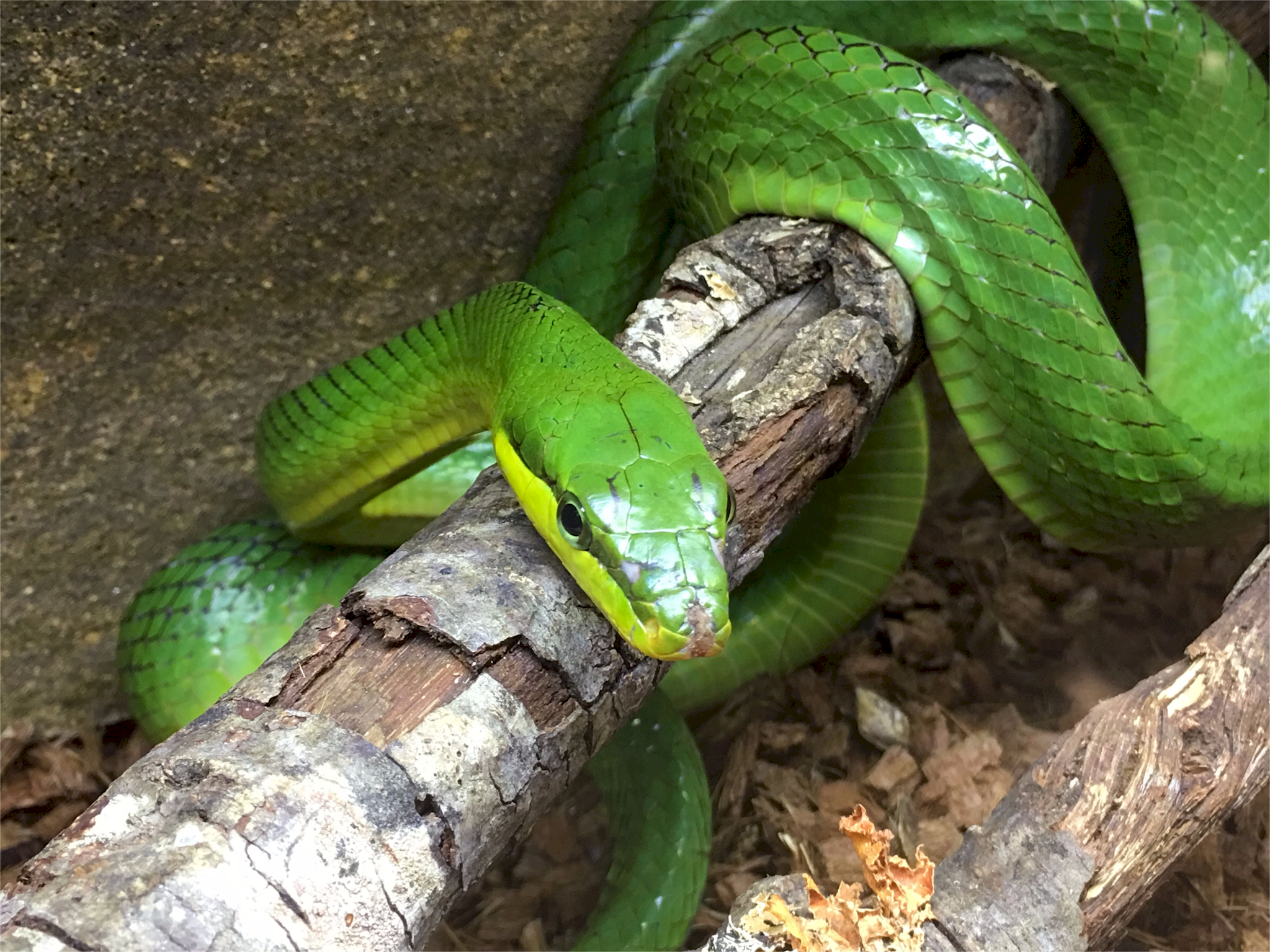 Looking for a new family pet, like a green python? Hundreds of reptiles, amphibians, spiders, small exotic animals and more will be at Repticon Baltimore on Sept. 29-30 at the Maryland State Fairgrounds in Timonium. Vendors, breeders and educators will be at the family-friendly expo, which will feature seminars, merchandise and live interactions with potential pets. The expo runs from 10 a.m. to 5 p.m. Saturday and 10 a.m. to 4 p.m. Sunday. Tickets are $10 for adults, $5 for kids 5-12 and under 5 are free. Visit repticon.com/maryland/baltimore for more.