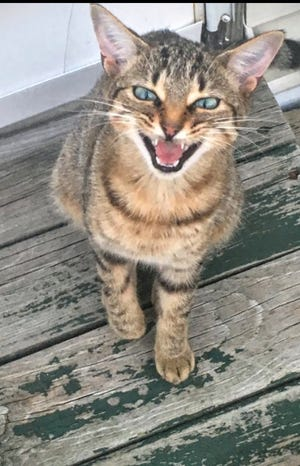 The Michigan Barn Cat program by Community Cat United works to locate un-adoptable or feral cats and find homes for them in barns and sheds on farms across the state. The cats provide poison-free pest control.