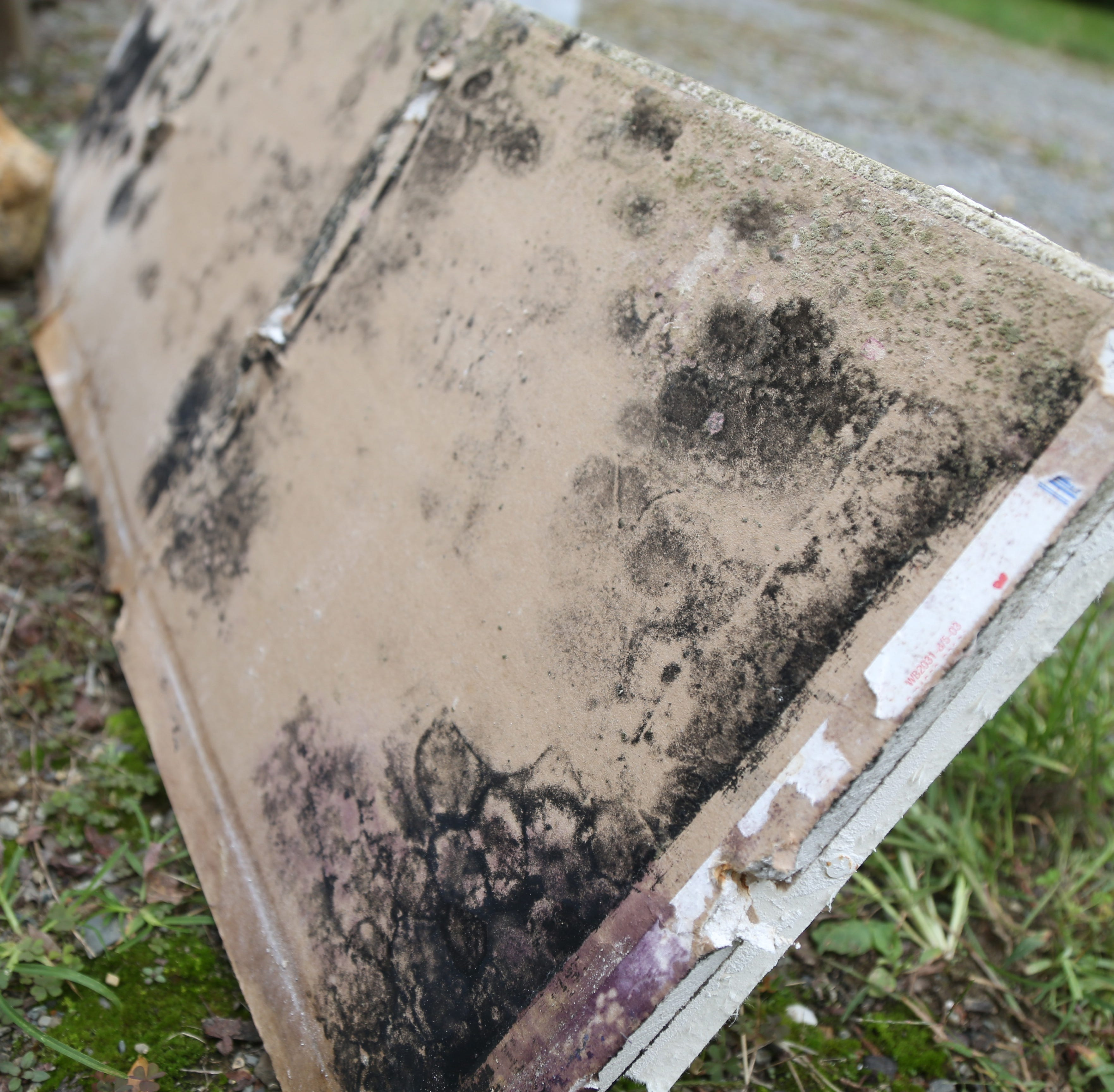 Tips on preventing and getting rid of mold to protect health and home