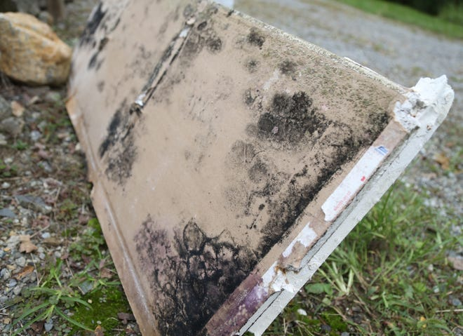 A portion of sheetrock removed from a home shows the mold growth that may take place inside a wall and out of sight.
