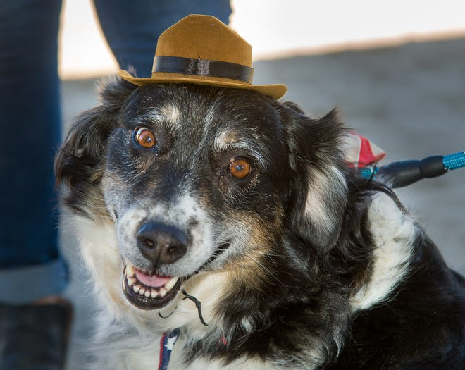 Kaia, an Australian Shepard, came dressed for the grand opening event.