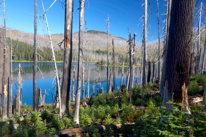 Mowich Lake in the Mount Jefferson Wilderness was burned by the B&B Complex Fire 15 years ago this month.