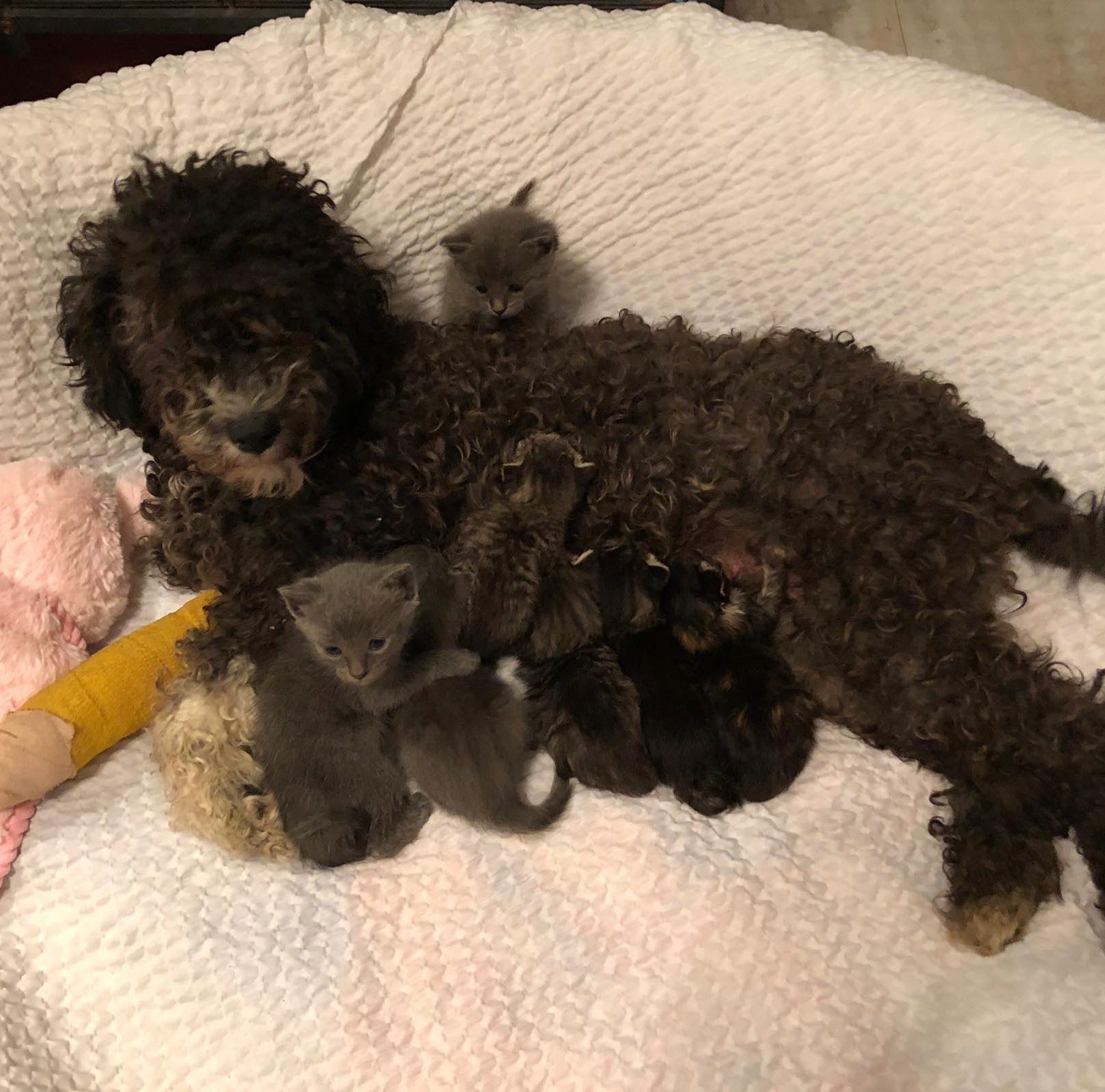 Injured dog took care of kittens but needs surgery and you can donate