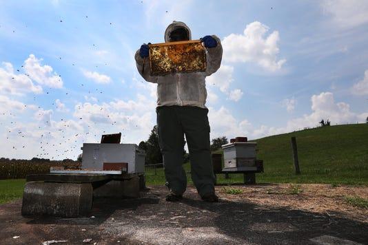 01 Zan Beekeeping