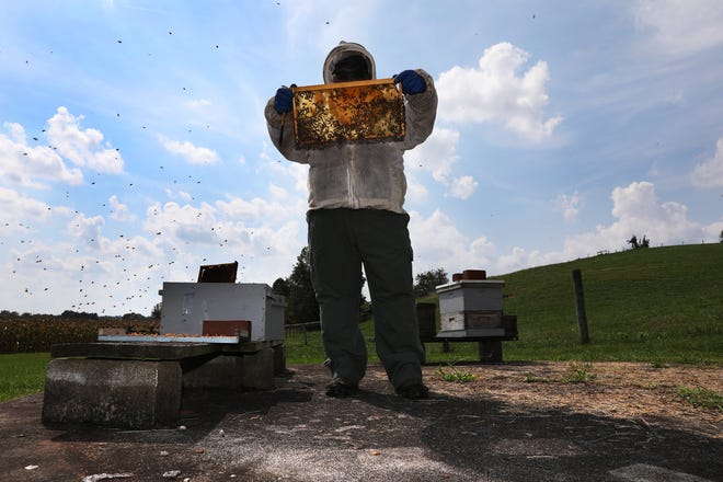 Honeycomb glows in the sun as James Devoll looks at one of his beehives.