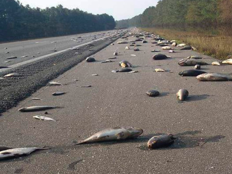 This Saturday, Sept. 22, 2018 photo provided by the North Carolina Department of Transportation shows fish left on Interstate 40 in Pender County in eastern North Carolina after floodwaters receded. Thousands of coastal residents remained on edge Sunday, told they may need to leave their homes because rivers are still rising more than a week after Hurricane Florence slammed into the Carolinas.