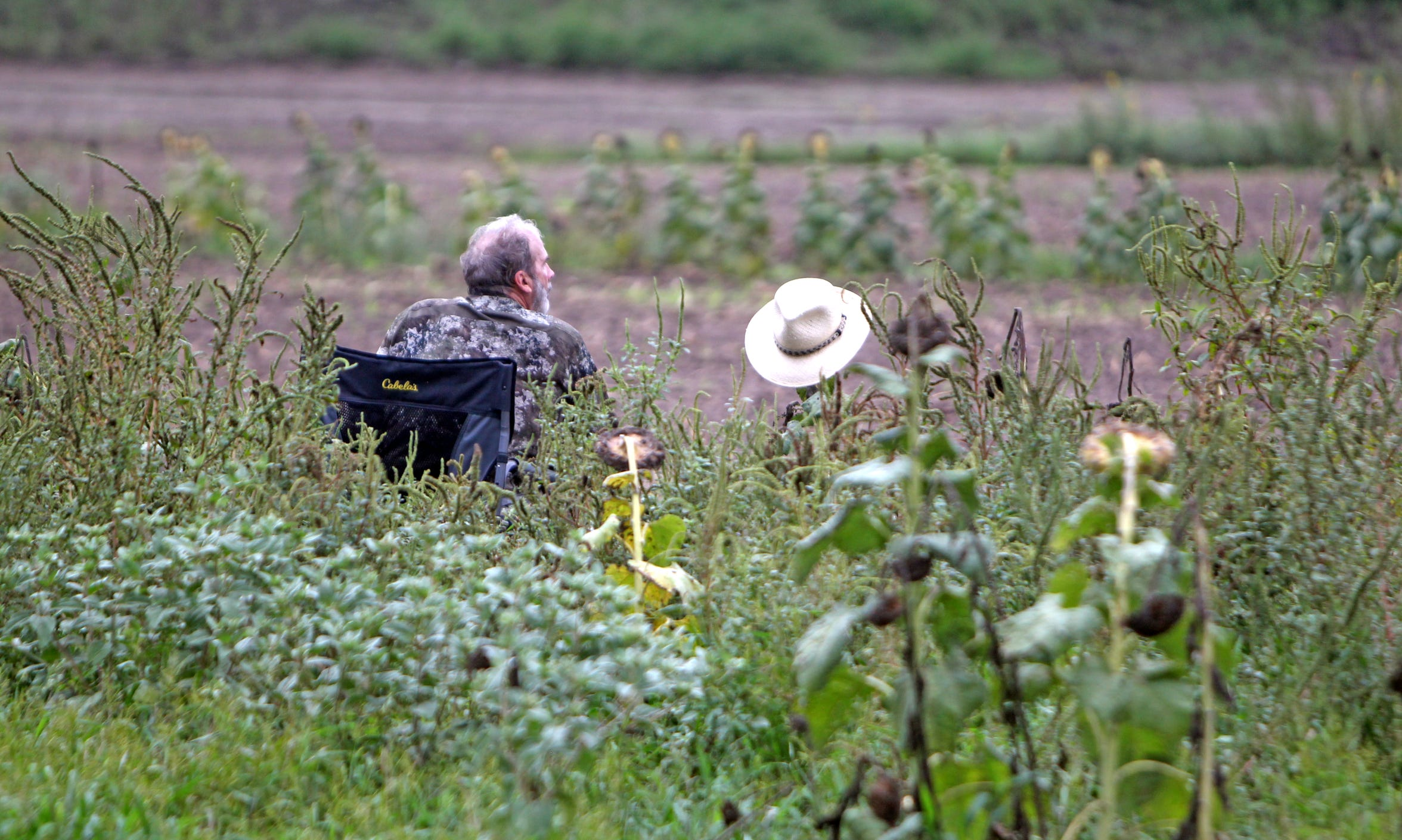 David Wilkinson awaits the next flight of doves in a sunflower field along the Rio Grande.