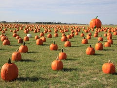 Pumpkin patches, apple orchards and corn mazes to visit in central Iowa this fall