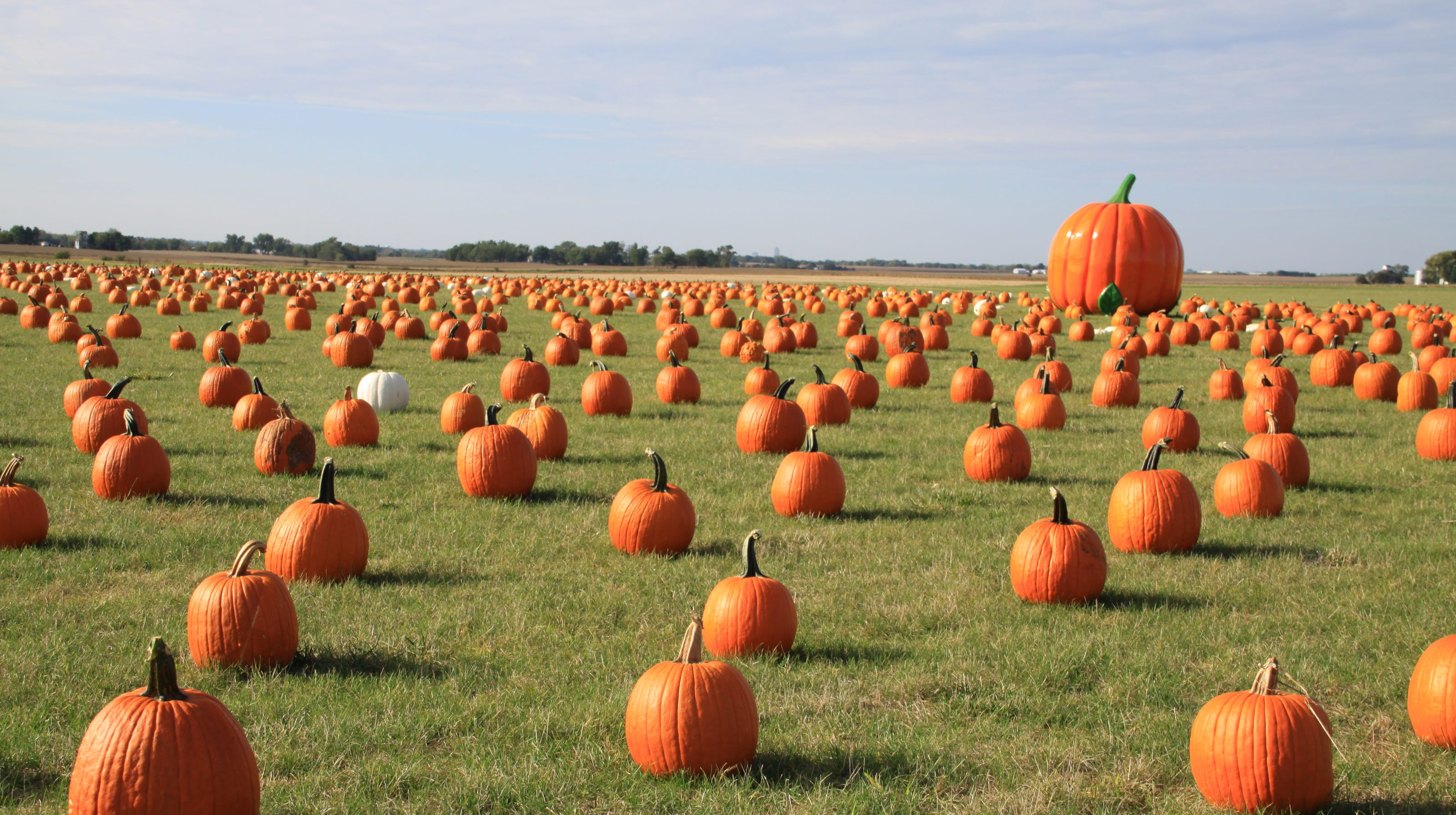 Pumpkin Patches Apple Orchards And Corn Mazes In Des Moines Area 2020 Edition