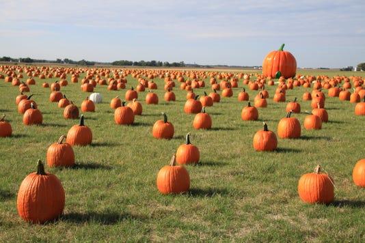 Geisler 2017 Pumpkins