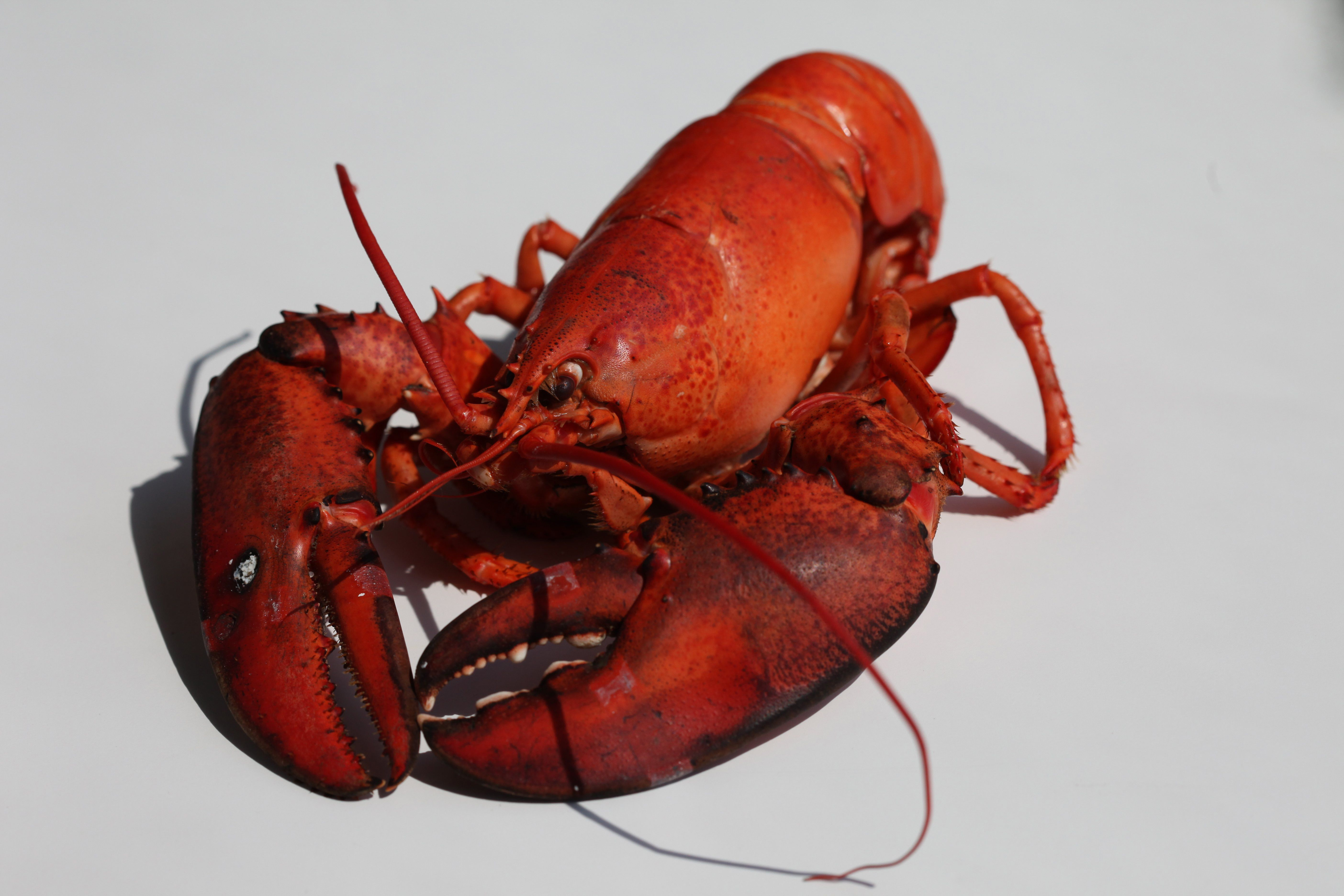 One lobster doesn't yield a lot of meat. A lobster isonlyabout 25 percentmeat.