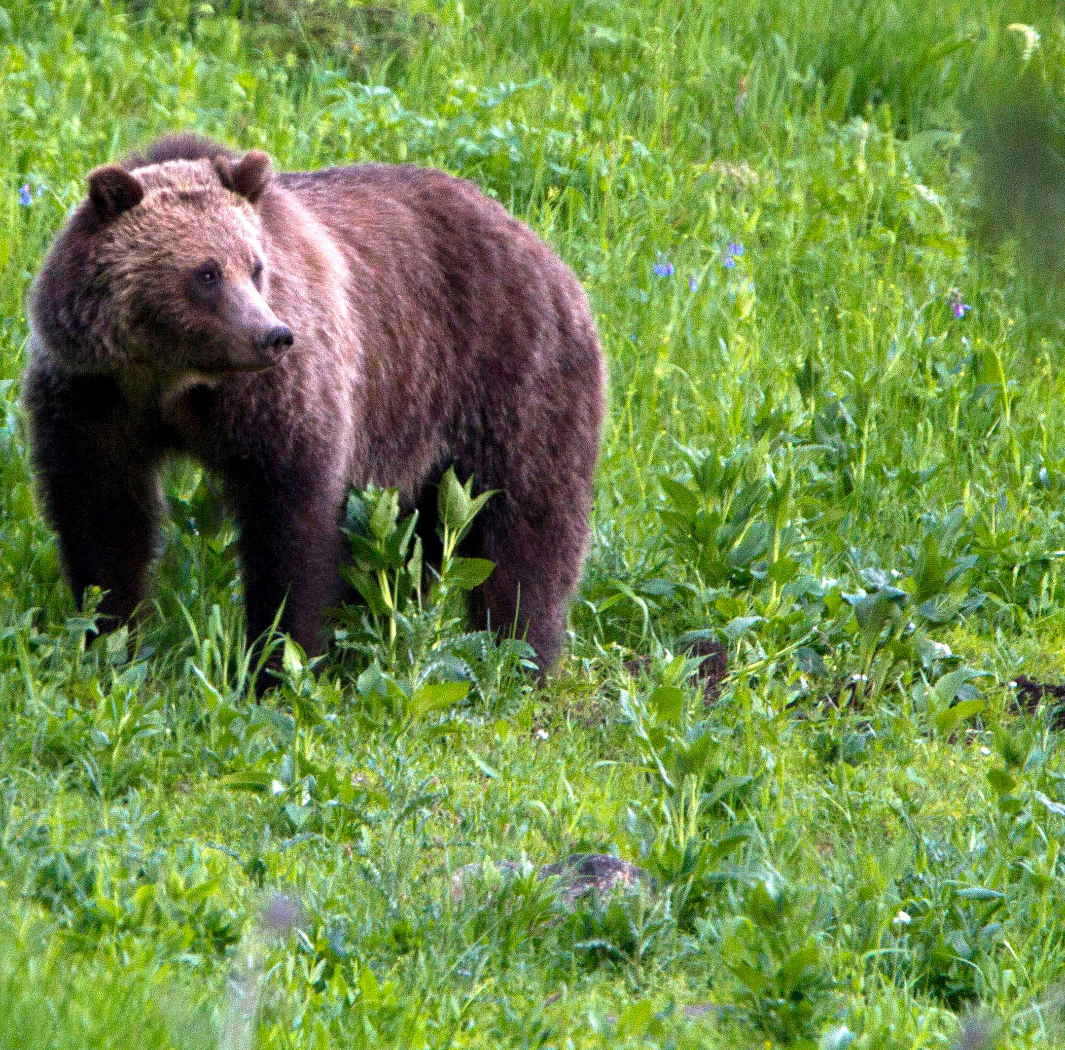 Elk hunter recovering after bear attack, suffered broken arm
