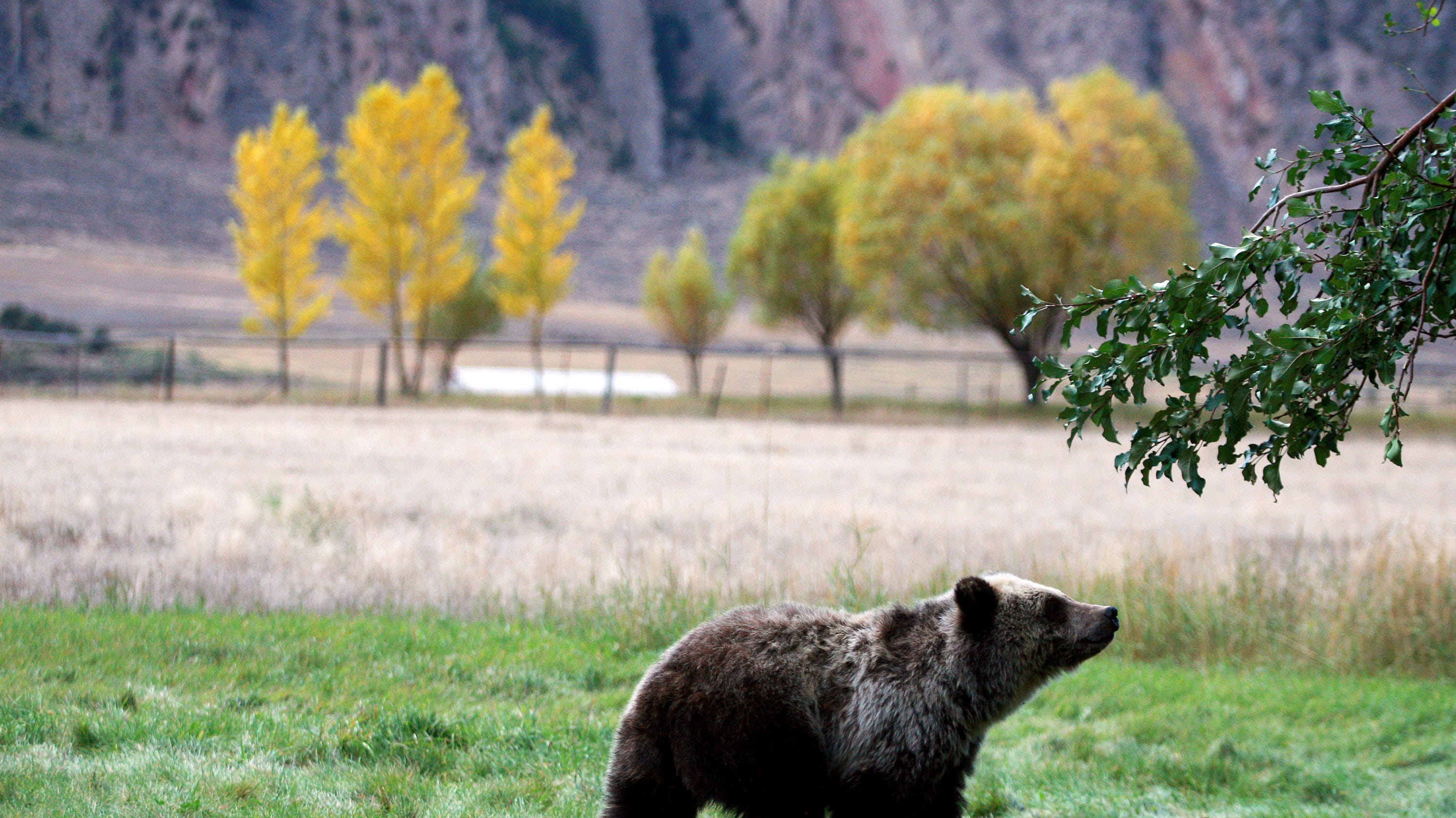 Montana wildlife commissioners adopted a grizzly bear conservation plan Monday.