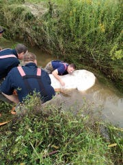 Madison County Fire Department crews work to rescue a horse from a drainage ditch Tuesday morning. The horse is now doing well.