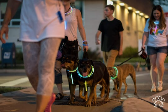 Brew City Bully Club is hosting its annual Color Crawl, a glow in the dark dog walk, at 6 p.m. Oct. 5 at Wisconsin Avenue Park in Wauwatosa.