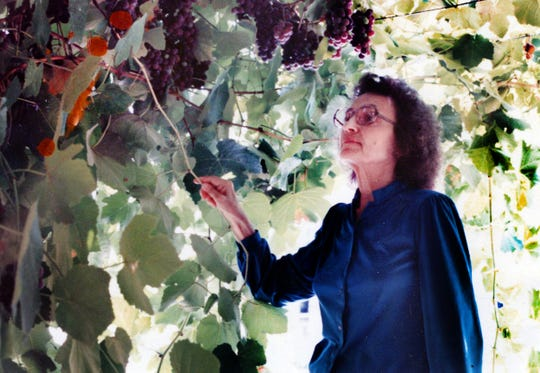 Russ Taff's mother, Ann, around 1985 with grapes growing at her house in California.