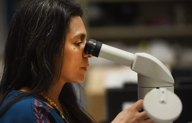 Rutgers Ph.D Student Stephanie Bondockawa Mafla-Mills, looks at a specimen of a dragonfly through a microscope at her lab located at Boyden Hall of Rutgers-Newark, photographed on 09/25/18. She and Rutgers Ph.D candidate Megan Wilson (not shown) conduct two separate research proposals that both involve insects that could only be found at the Brazil National Museum, which was ravaged by a fire earlier this month.