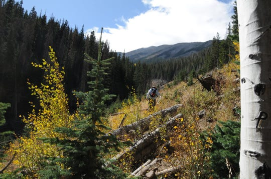 The San Francisco Peaks seen from Abineau Canyon.