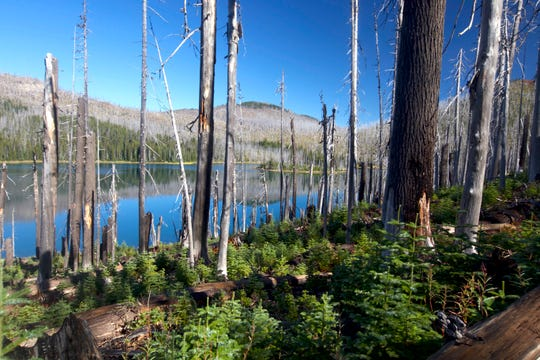 Mowich Lake in the Mount Jefferson Wilderness shows both trees burned by the B&B Complex and the small forest along the forest floor.