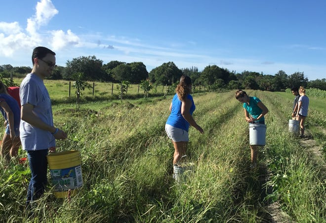 Eighth-grade students from St.Helen Catholic School participated in a service project at Shining Light Garden on Sept.8, where they harvested vegetables for the needy.
