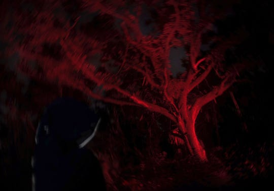 The Devil Tree in Port St. Lucie's Oak Hammock Park is said to be haunted by two teens who were murdered near there in 1971.