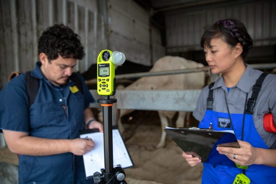 Collaborators Mario Mondaca Duarte, left, a research associate and ventilation specialist with the The Dairyland Initiative in the School of Veterinary Medicine, and Jennifer Van Os, right, UW–Madison assistant professor of dairy science and extension animal welfare specialist, prepare an airflow study in a cross-ventilated barn at Rosy-Lane Holsteins in Watertown, Wis., Wednesday, Aug. 29, 2018. The UW–Madison researchers are using anemometers, foreground, placed at various points in the structure to measure airflow speeds.