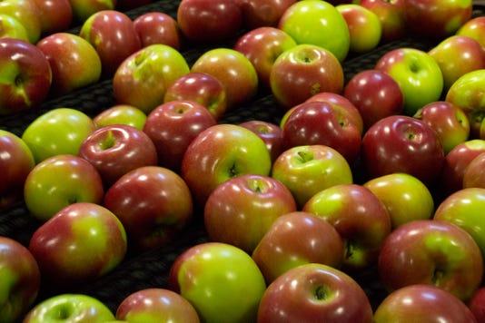 Wsf 0928 Uw Madison Apples 3