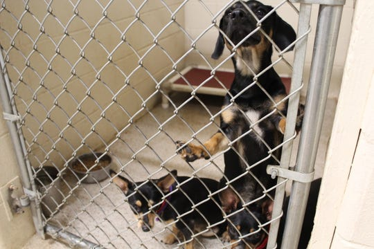 Dogs found running loose in the county or city and the owner cannot be located are taken to the Calhoun County Animal Center where they will be placed up for adoption.