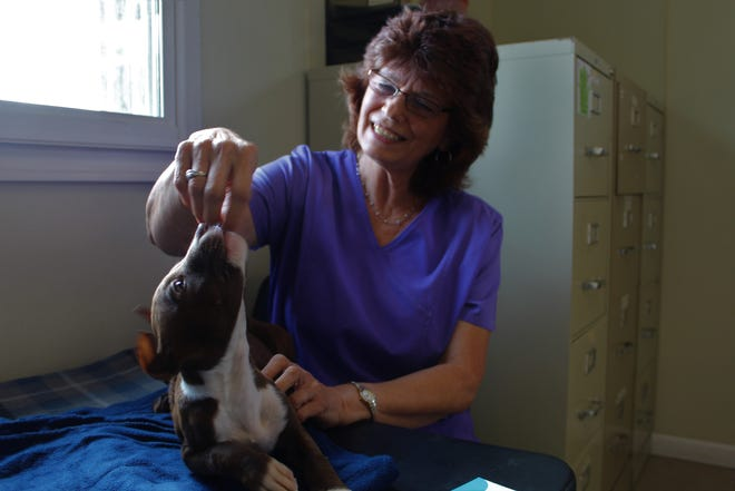 Cynthia Buford, owner of the Calhoun County Animal Center, plays with 12-week-old Kass, a pitbull, boxer mix who was found in a box on the side of a county road and taken to the animal shelter.