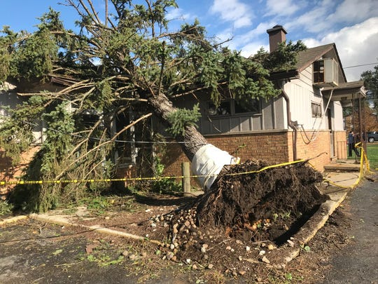 The storm and high winds uprooted a tree behind a dental office on West Jefferson in Gibraltar.