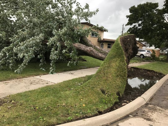 An uprooted tree at Luke Langmeyer's home in Gibralter takes much of the yard with it.