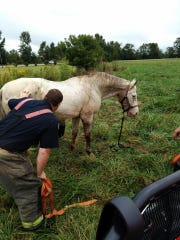 Madison County Fire Department crews helped get this horse out of a ditch and back on solid ground Tuesday morning. The horse is doing well, according to its owner.