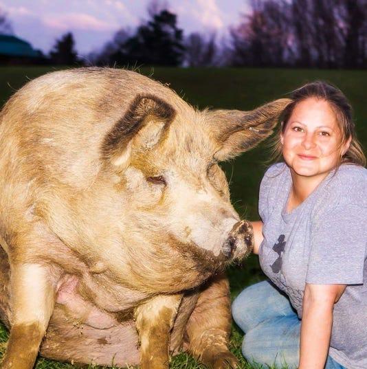 Vfafton Hughes Pig Preserve