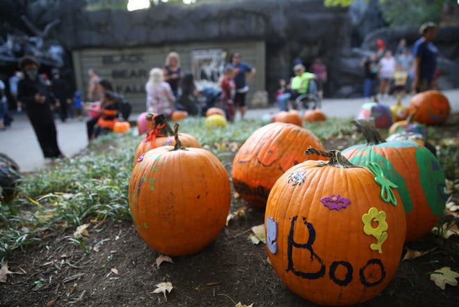 Zoo Knoxville's BOO! at the Zoo always includes decorated pumpkins.