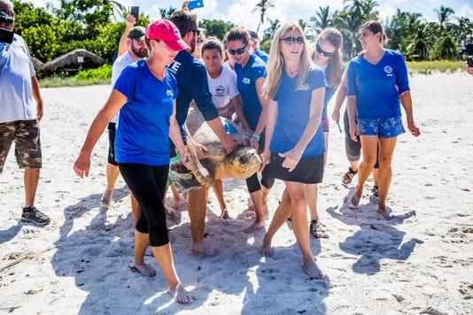 Lede Ndn 0926 Turtle Release