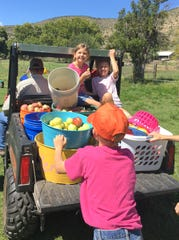 It helps to be young when harvesting applies.