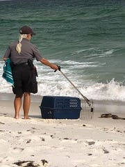 A large snake was rescued from Pensacola Beach Tuesday near the Fort Pickens area.
