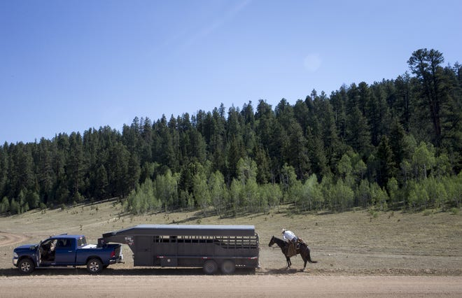 Justun Jones dismounts Blueberry after moving cattle in the south summer pasture at North Rim Ranches on the Kaibab National Forest north of the Grand Canyon.