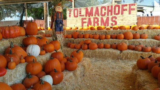 Tolmachoff Farms is holding their corn maze and pumpkin patch, along with a petting zoo and bouncy house.