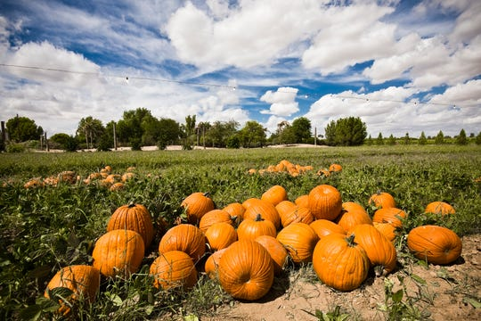 Schnepf Farms Pumpkin and Chili Party returns with activities for all and, of course, pumpkins.