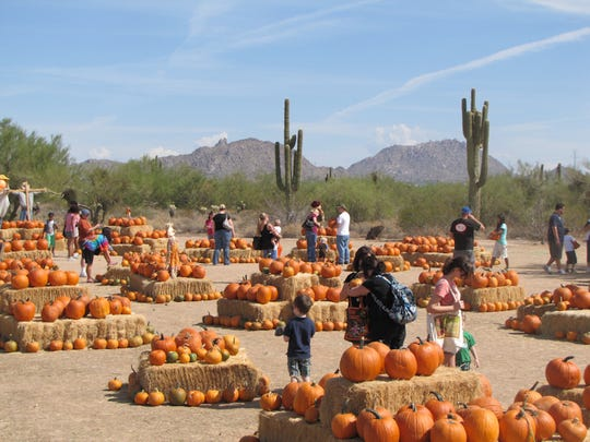 Families attend the annual pumpkin patch and pick out their perfect pumpkin.