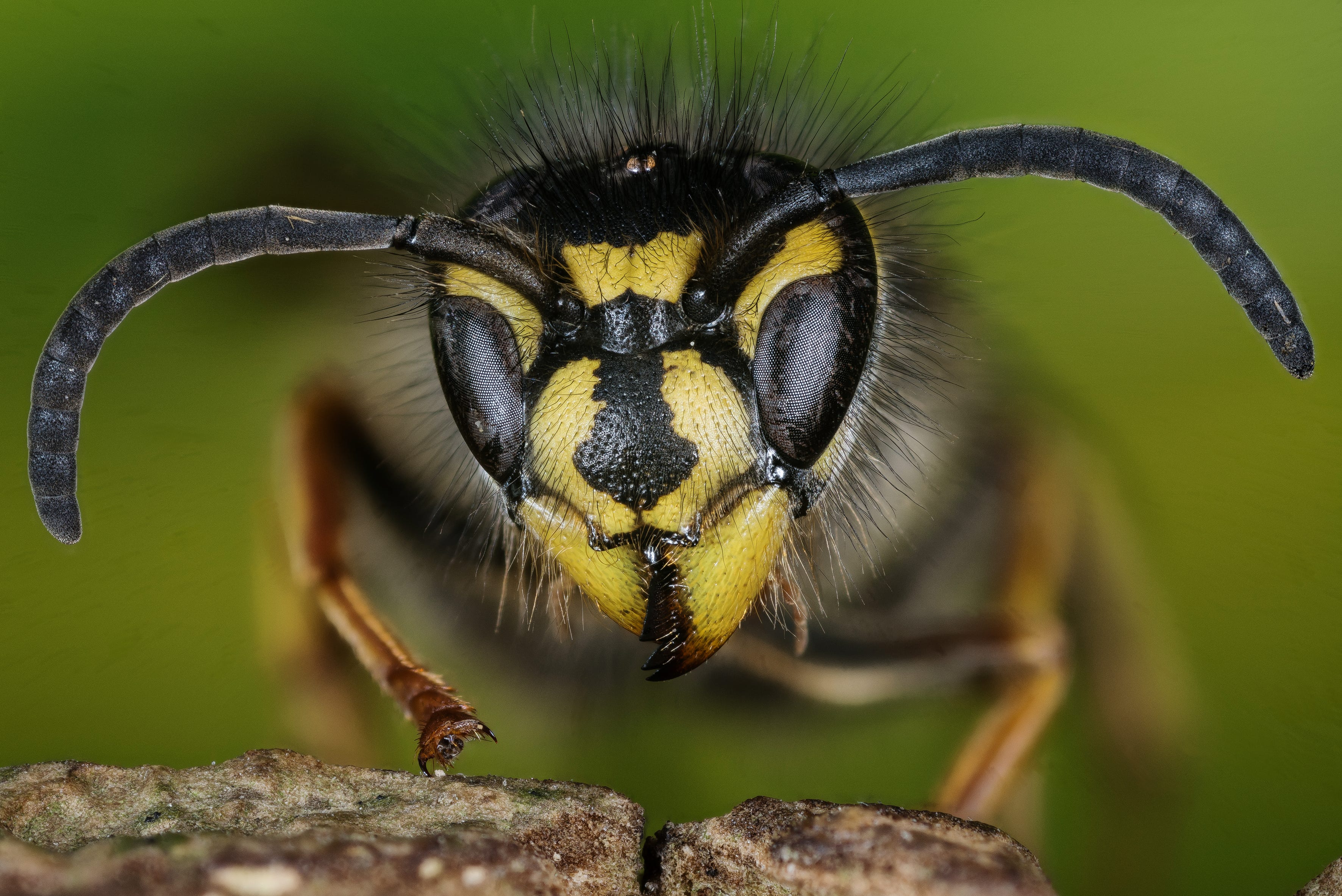 How to get rid of wasps, yellow jackets