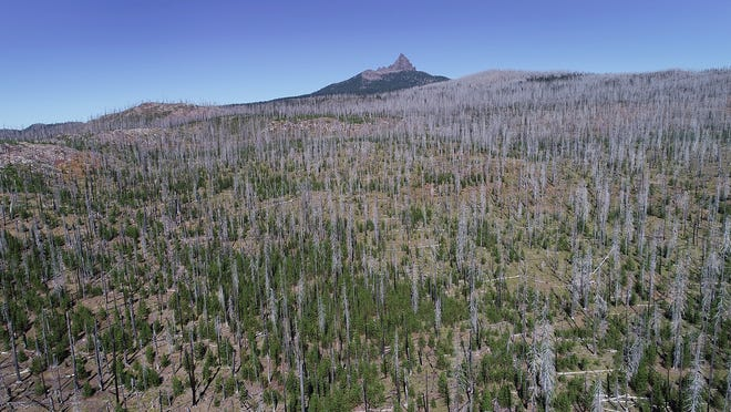 The silver color of the remaining snags dot the landscape, looking north towards Three Fingered Jack Mountain in the Santiam Pass where scars are still visible from the area burned by the B&B Complex 15 years ago. The more than 90,000 acre fire burned the area between Mount Jefferson and Mount Washington.