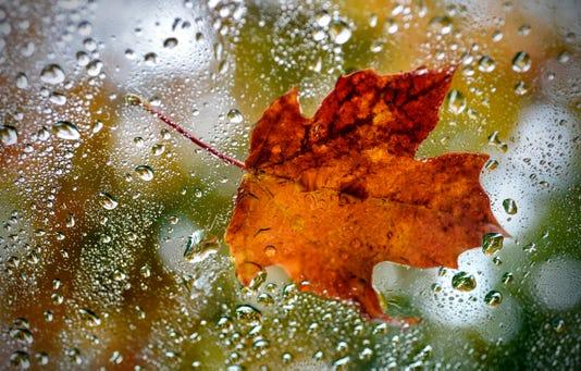 Leaf Filers 1