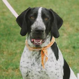 Rescue pet of the week: Jax
