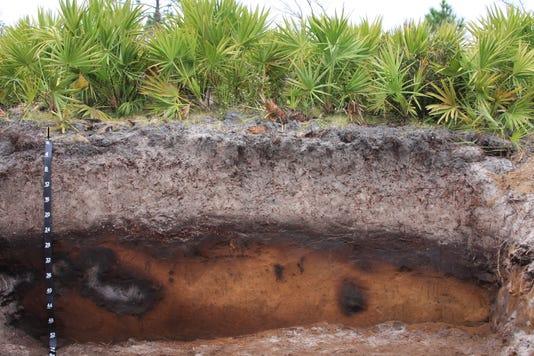 Myakka Soil Profile Ellis