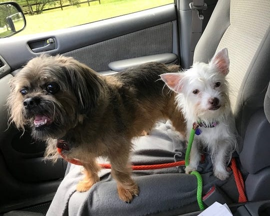 Ice and her best friend, Okee, enjoy a ride.